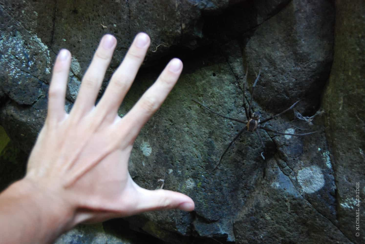 Giant Cave Spiders