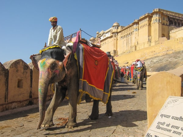 Indian Elephant outside temple