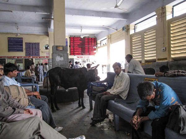 Indian Train Station, complete with cows, staring men and poo. Disgusting!