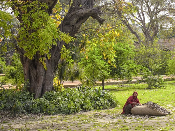 Indian lady collecting leaves