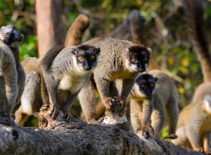 Honeymoon in Madagascar