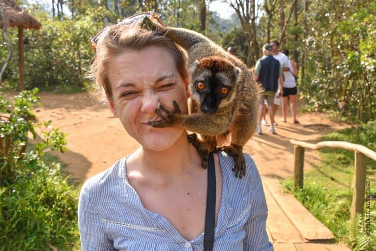 Friendly lemur jumping on Dora