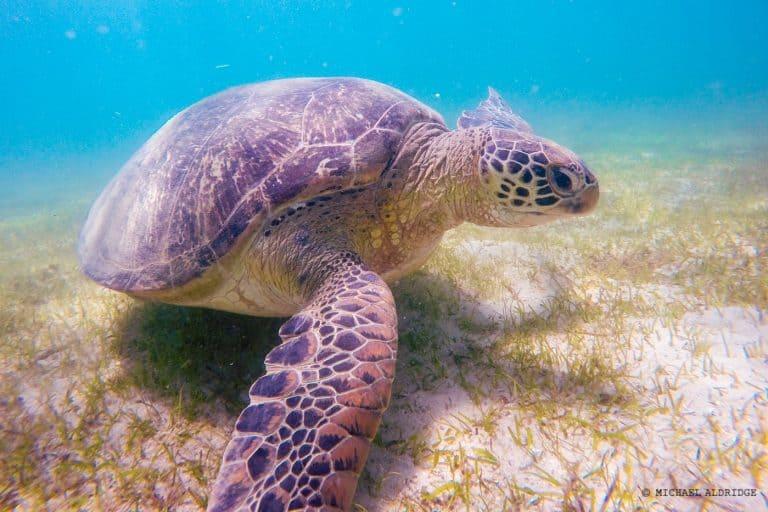 Sea Turtle Snorkelling, Madagascar