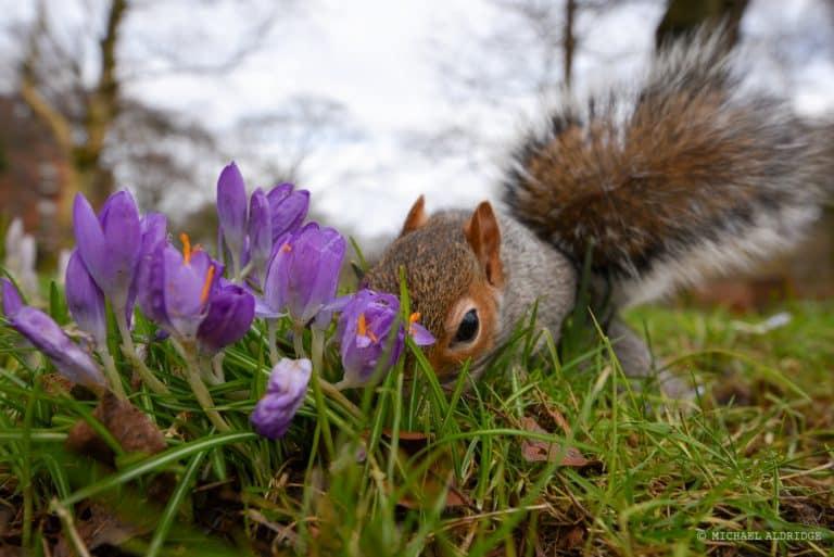 Squirrel in the Botanic Gardens, Glasgow Park