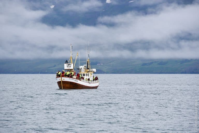 Akureyri Whale Watching, North Iceland