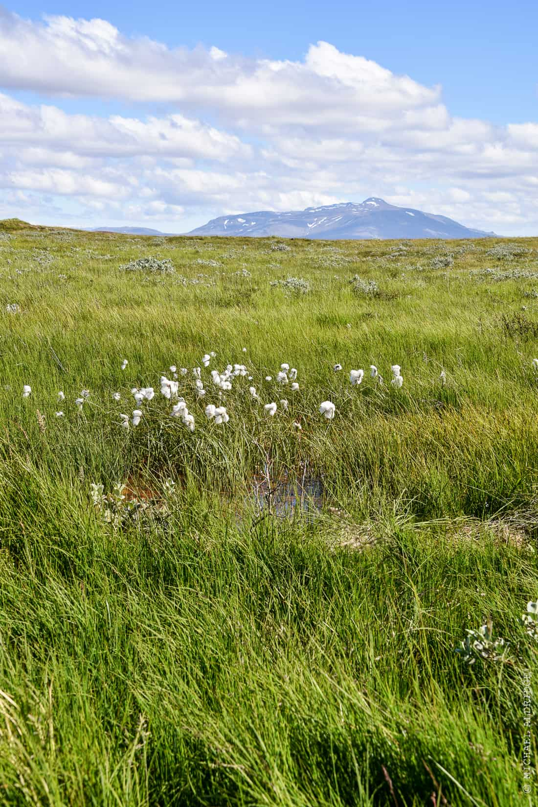 A view across a field, Gullfoss, Iceland