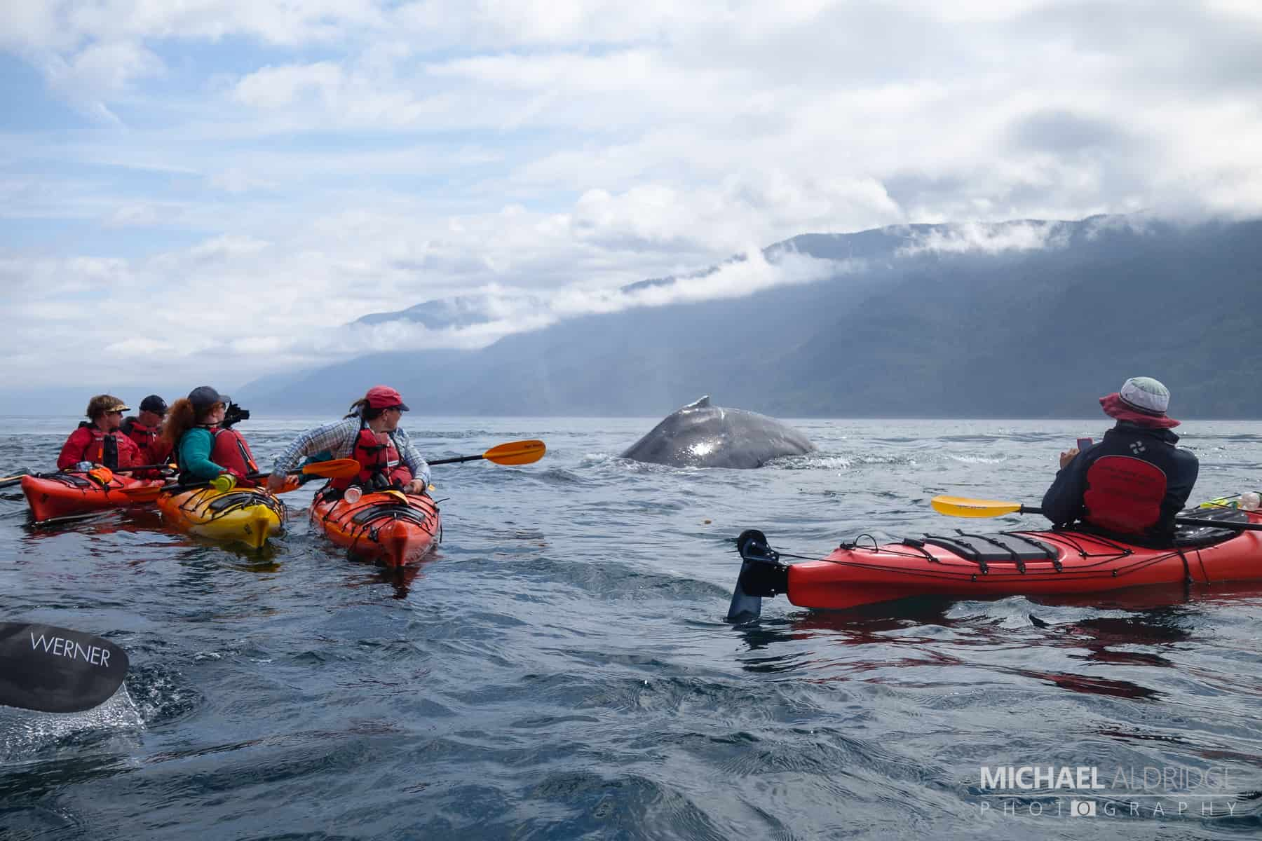Humpback Whale while kayaking the Johnston Strait