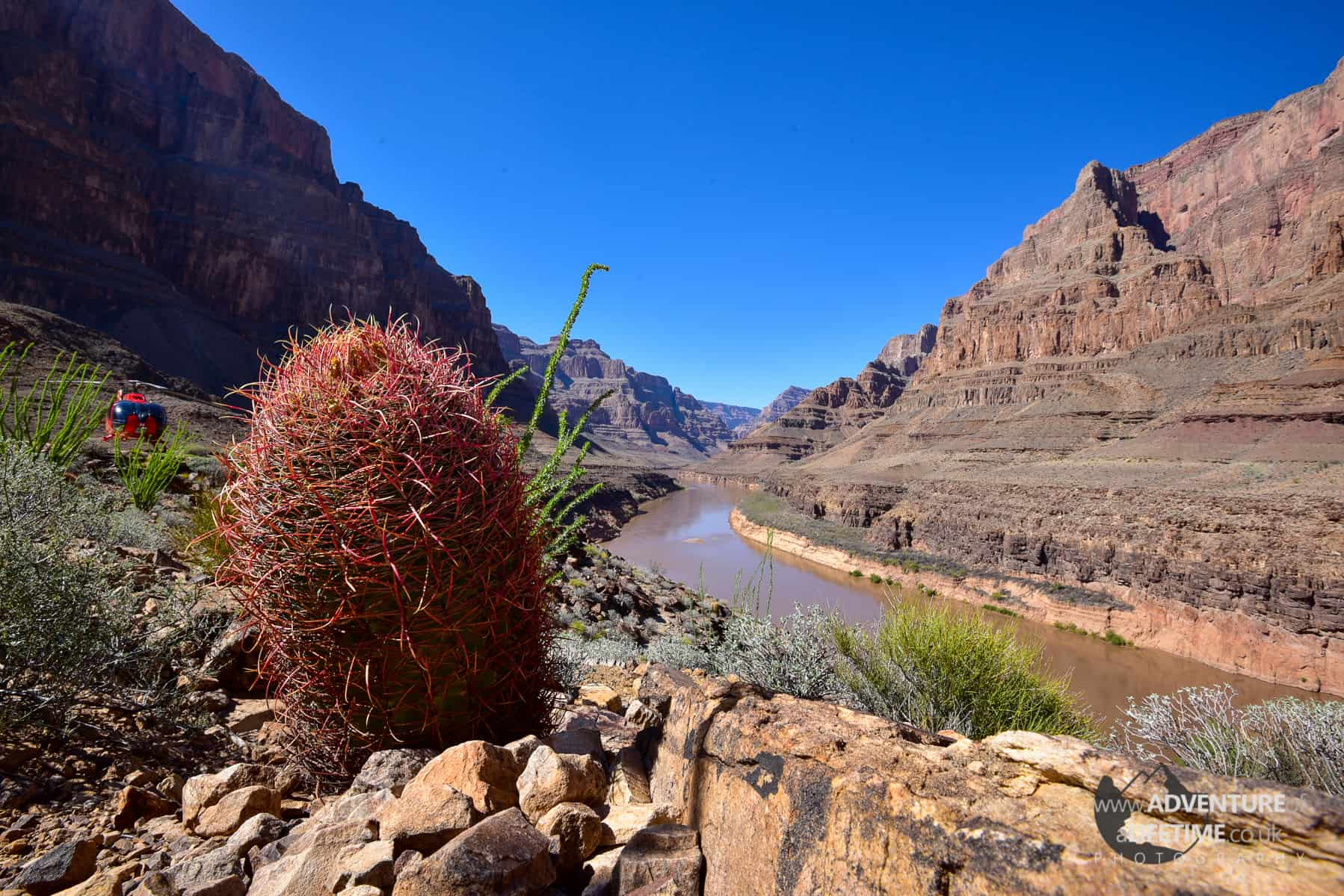 Cactus at The Grand Canyon
