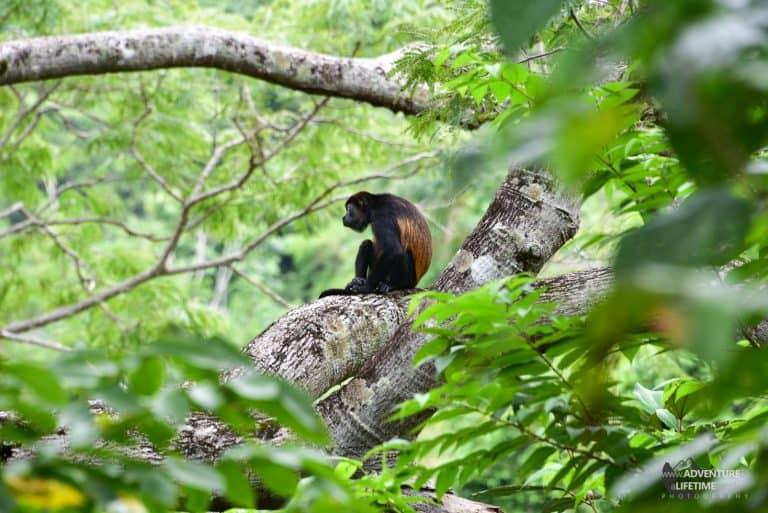 Costa Rica - Ara Project