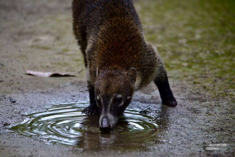 Guatemala - critter at Tikal