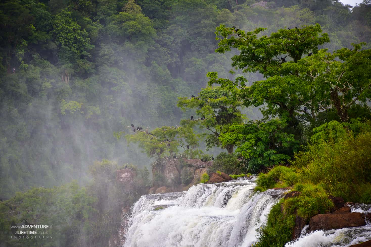 Birds in trees over Iguazu Canyon