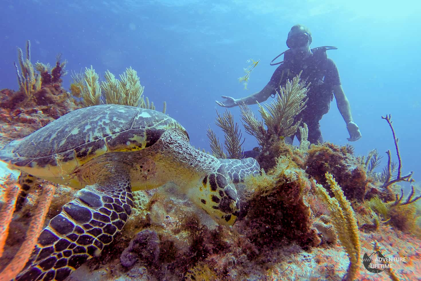 Cancun - Michael diving with a turtle