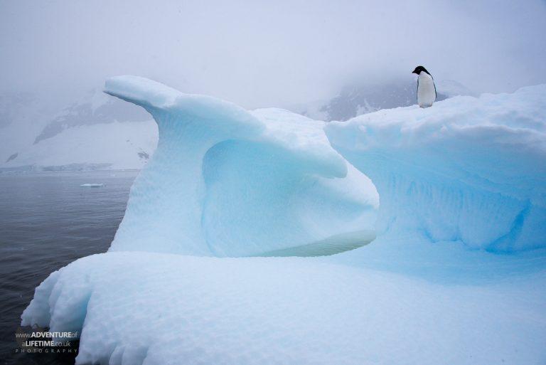 Adélie Penguin in Errera Channel, South Shetlands