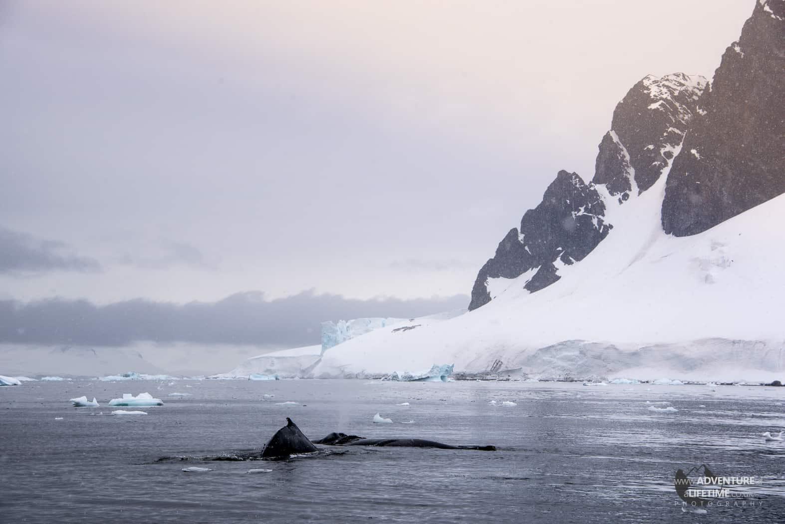 Beautiful Errera Channel in Antarctica