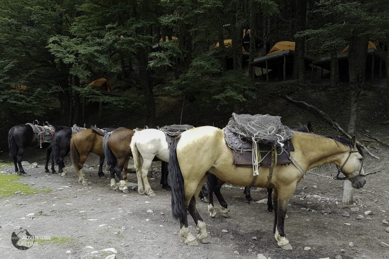 Chileno forest campsite with Horses