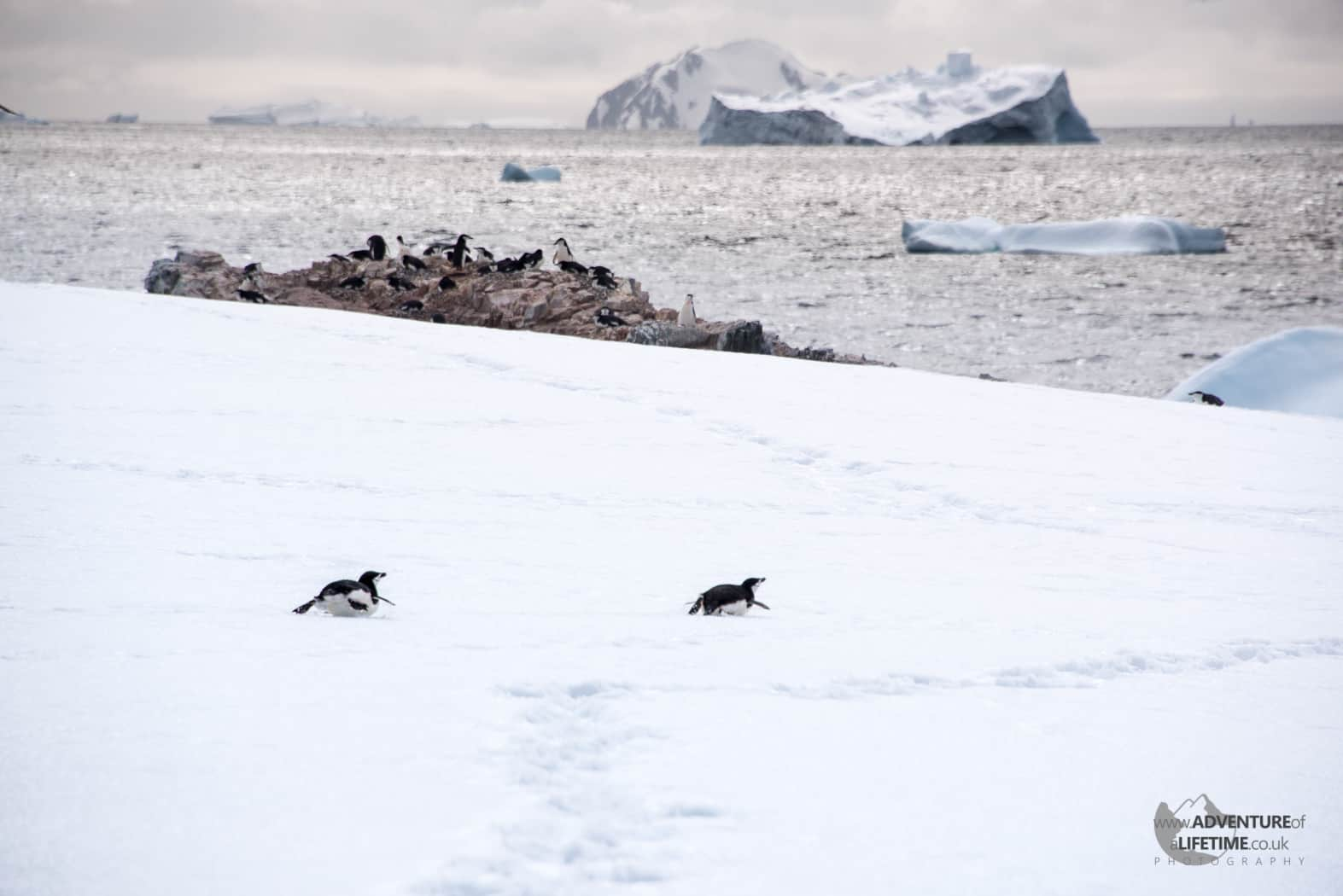 Penguin Games on Hydrurga Rocks, Antarctica