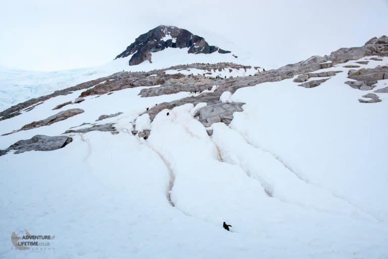 Penguin Highways through the Snow