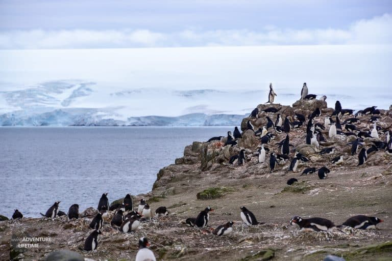 Penguin Rockery on Barrientos Island, Antarctica