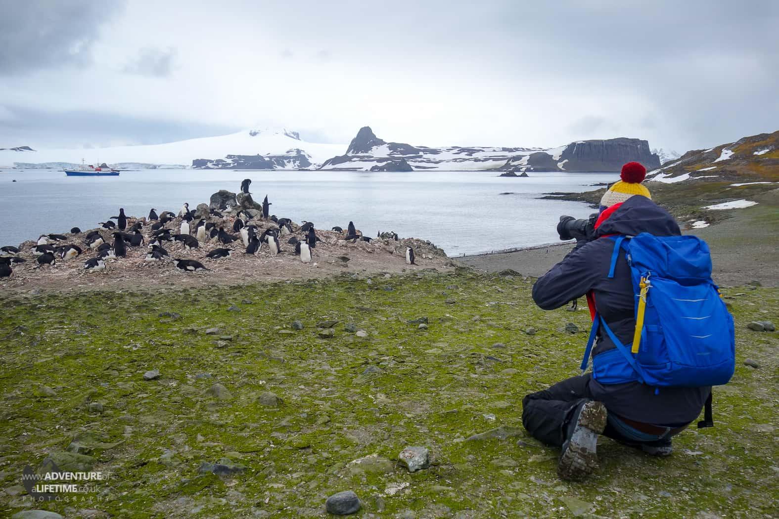 Chinstrap Penguin Rockery on Barrientos Island, Antarctica