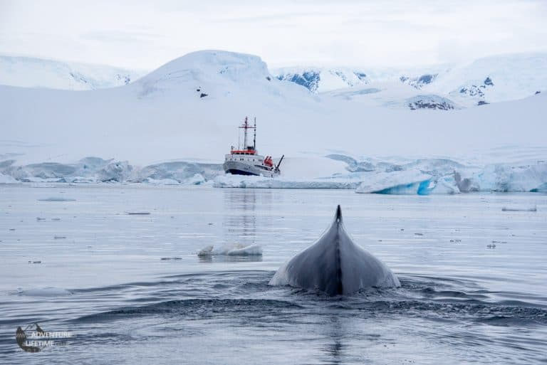Whale and Ushuaia Expedition Ship