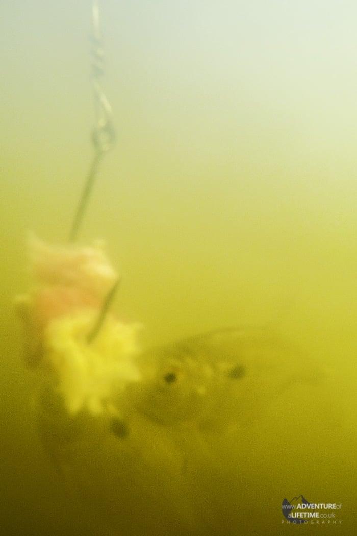 Underwater Piranha