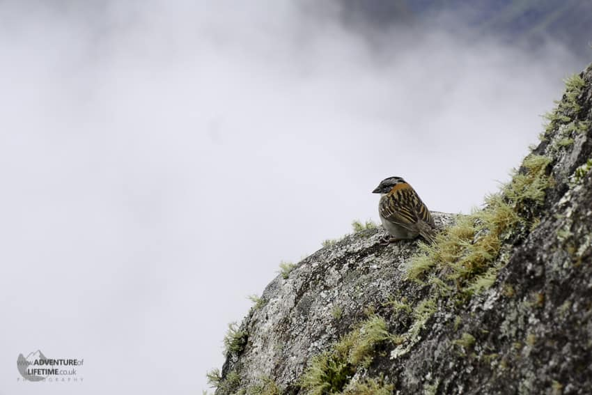 Bird on Cliffs of Huayna Picchu