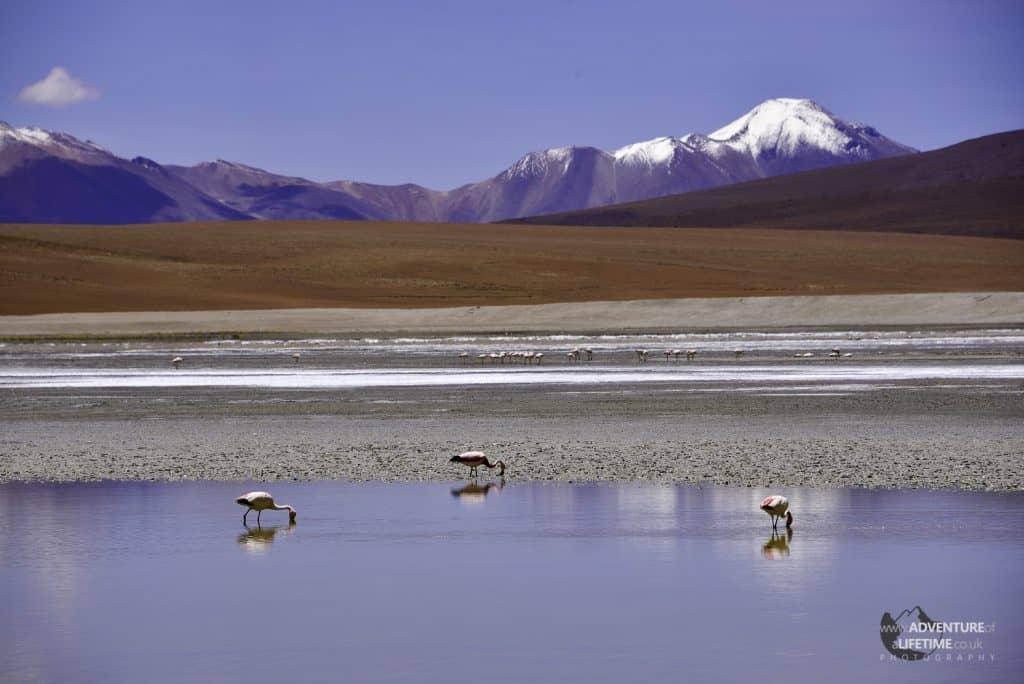 Flamingo Lake, Bolivia