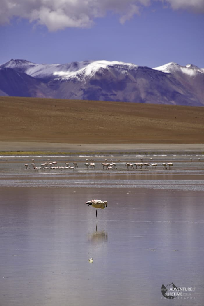 Flamingo and Mountain, Bolivia