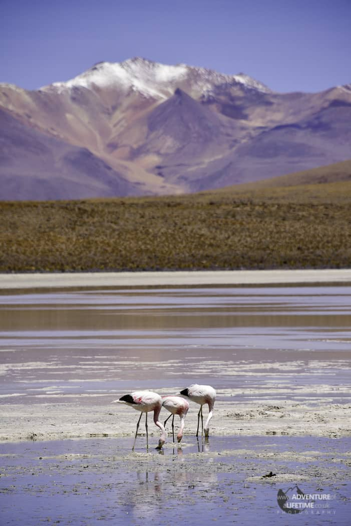 Flamingo's and Mountains