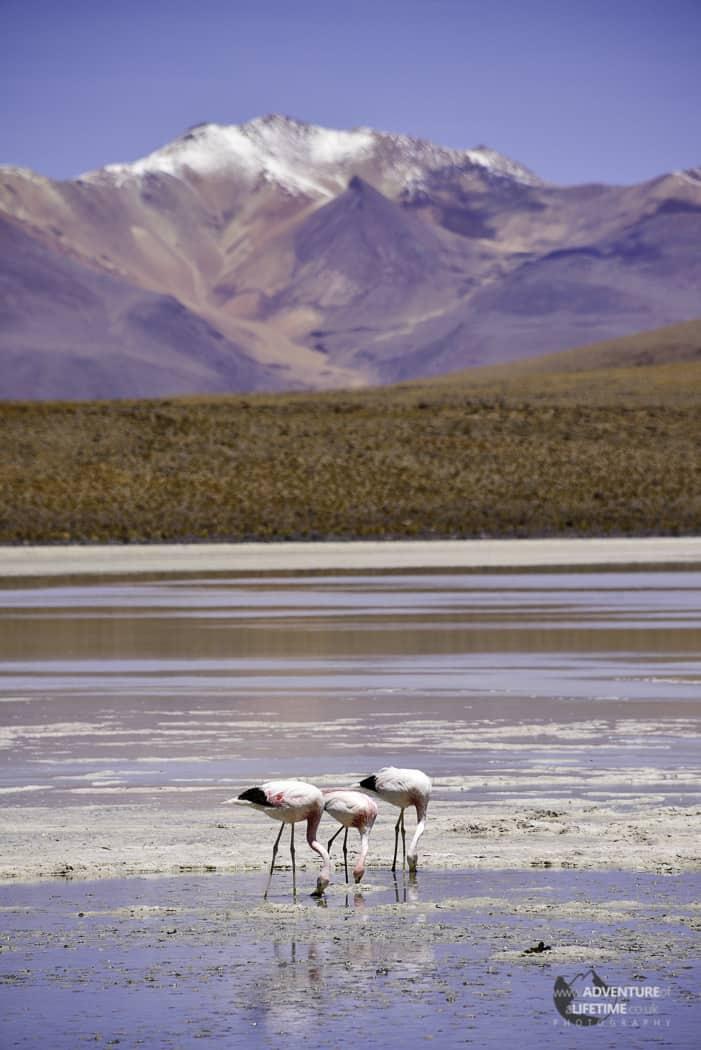 Flamingo's and Mountains
