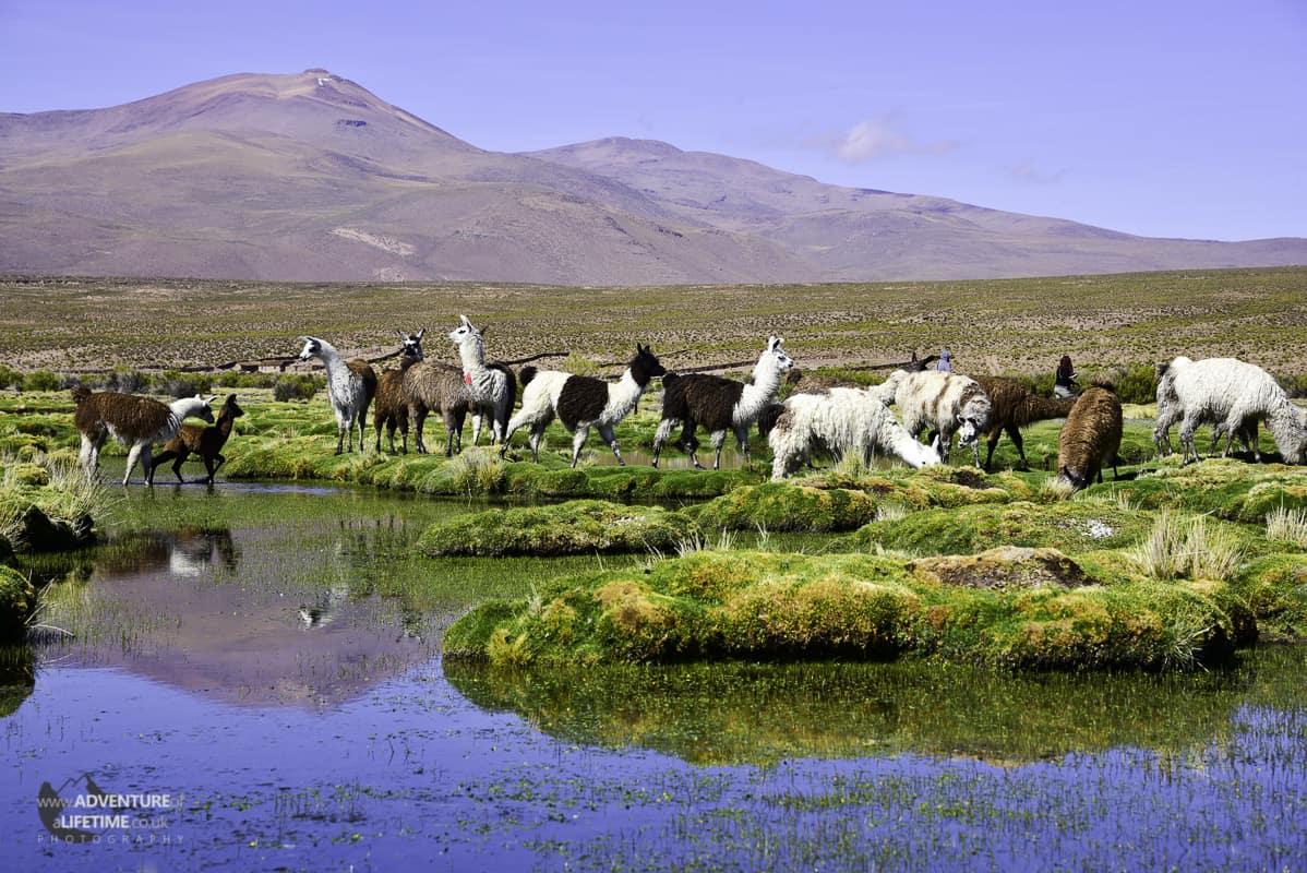 Mountains and Llamas of Southern Bolivia