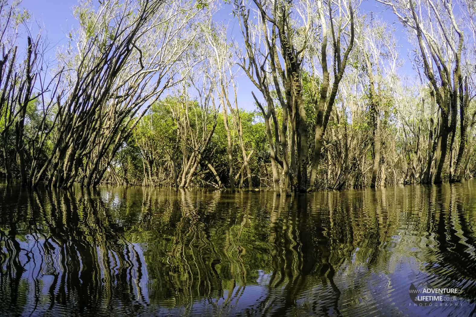 Pampas Wetlands Rainforest