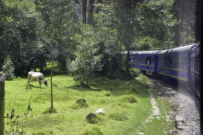 Train from Ollantaytambo to Aguas Calientes