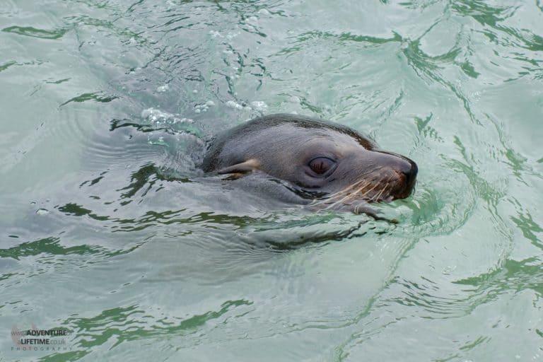 Abel Tasman Seal Mother