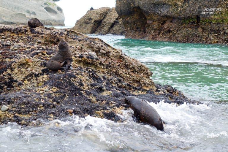Abel Tasman Seal Pups