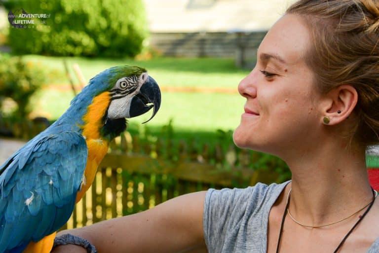 Dora & Parrot Friend