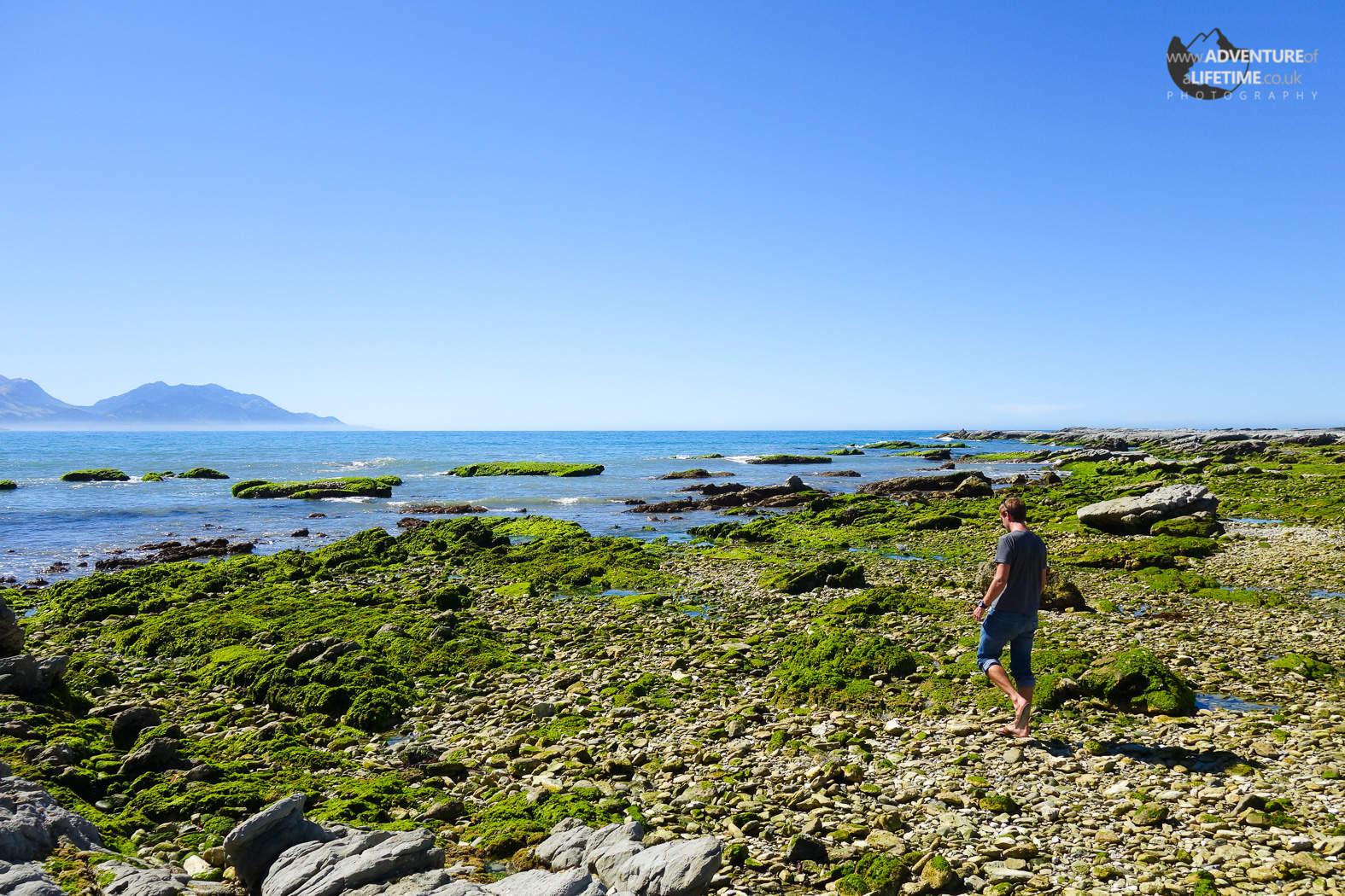 Michael exploring Kaikoura Peninsula