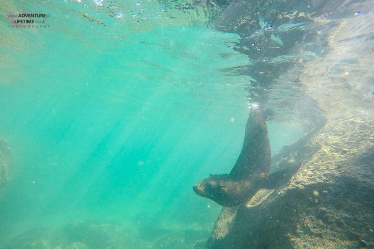 Seal Pups in Abel Tasman
