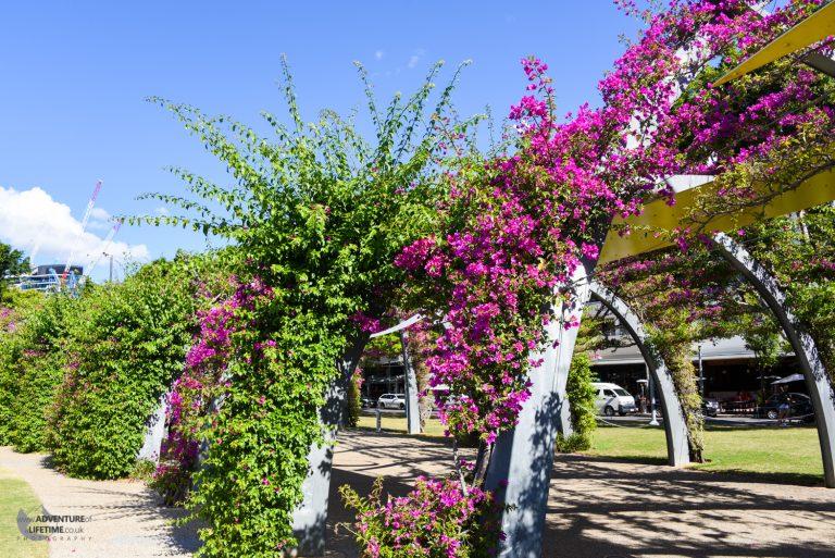Brisbane floral archways