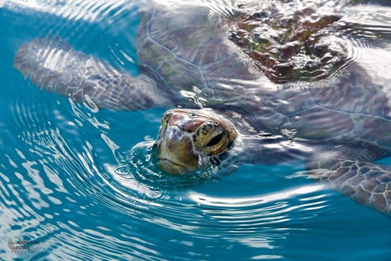 Friendly Turtle