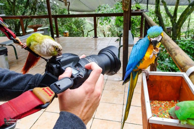 Getting all the attention at Birdworld