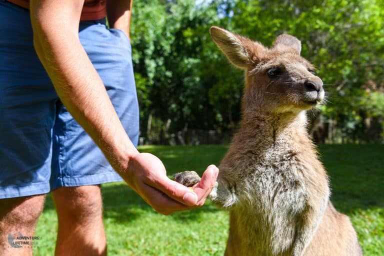 Holding hands with a Kangaroo!