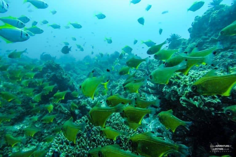 The fish of Julien Rocks