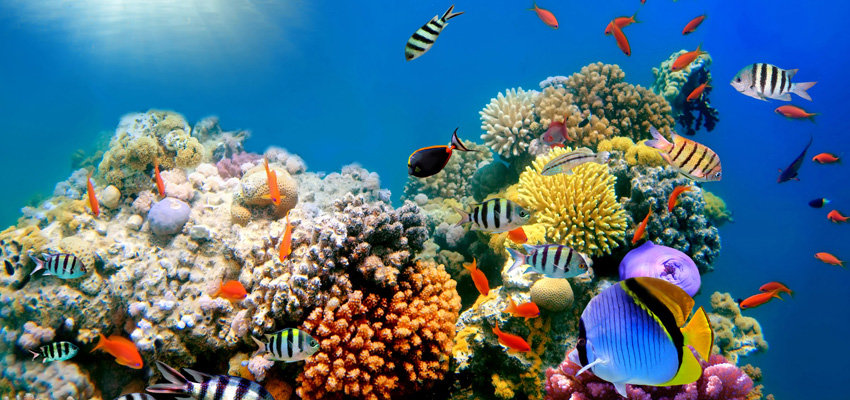 Top Travel Moments - Madagascar Reefs