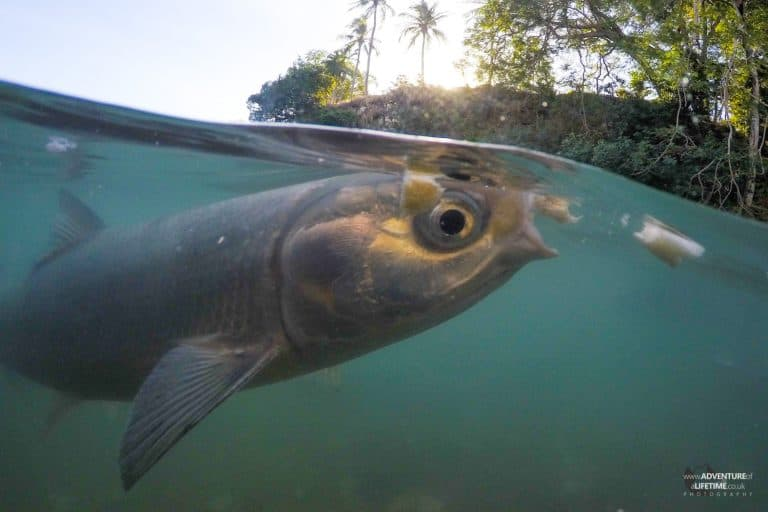 Fish Feeding at Aquascene in Darwin