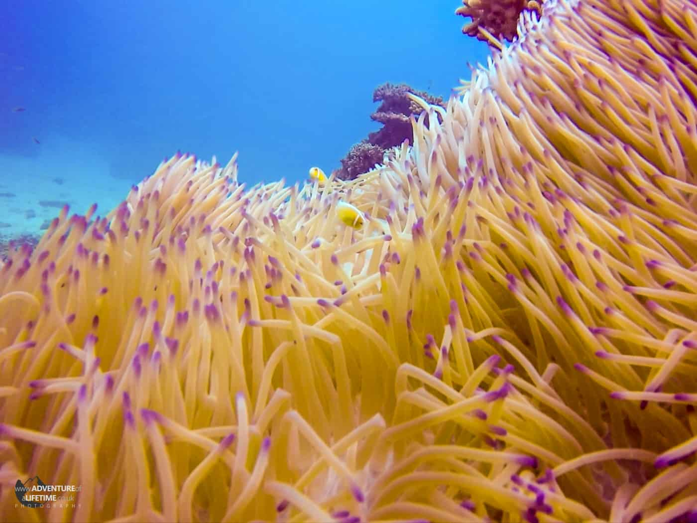 Finding Nemo on Great Barrier Reef