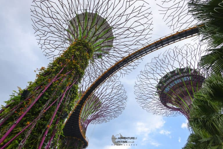 Gardens By The Bay Looking Up