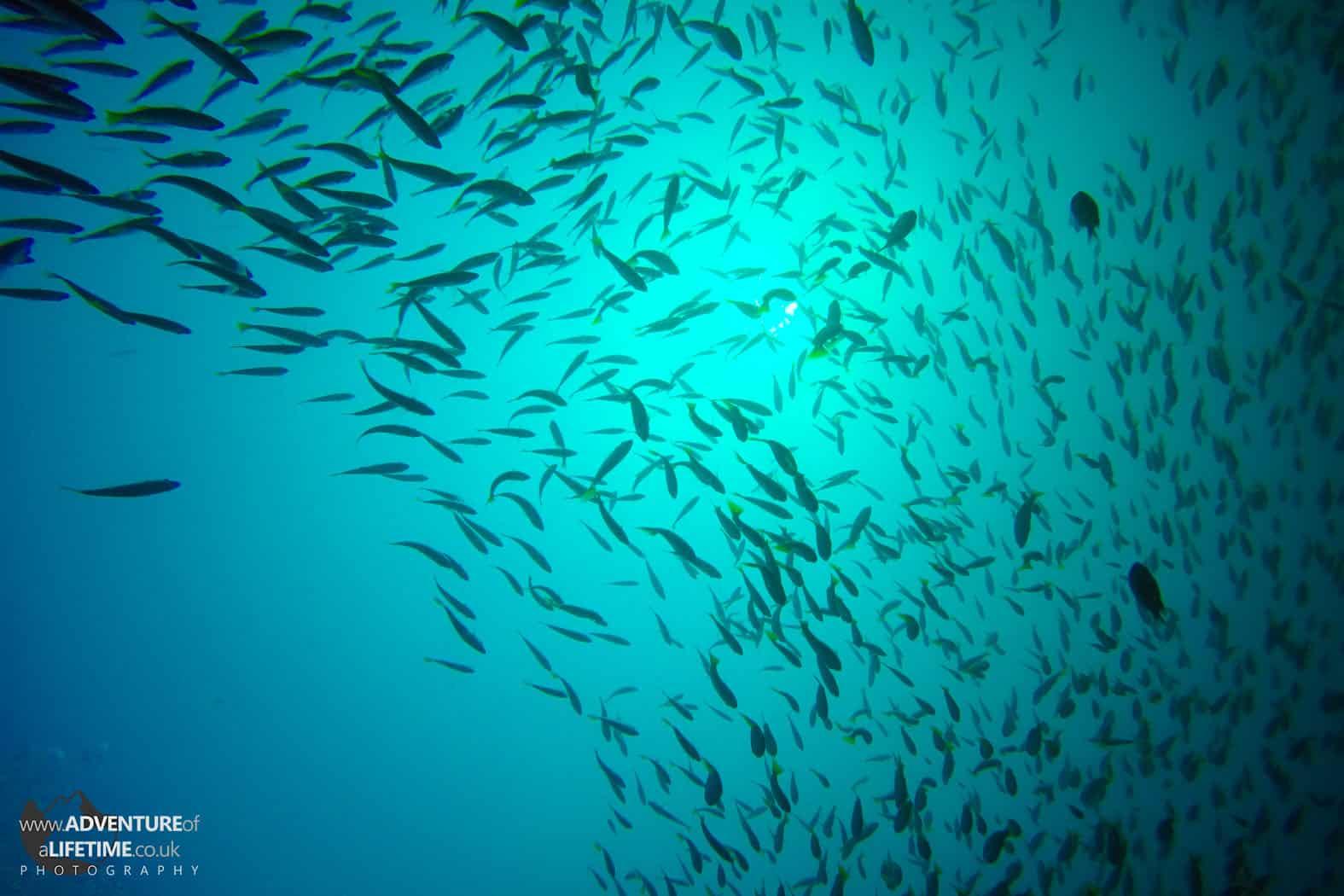 Koh Phi Phi Shoal of Fish