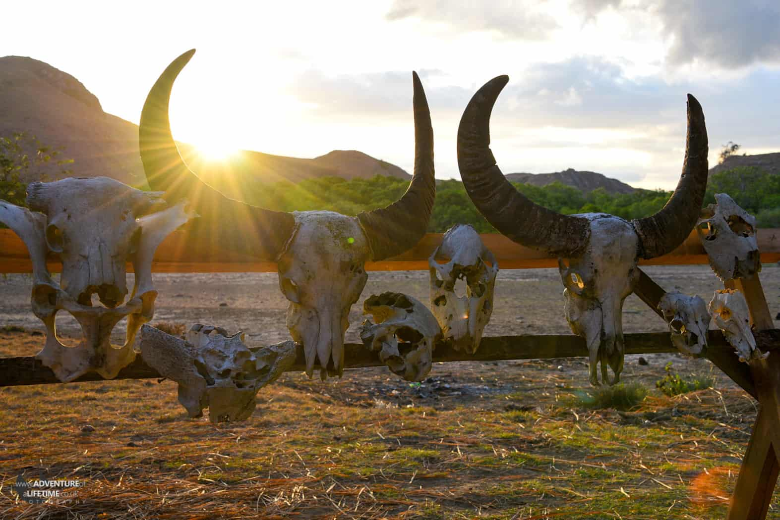 Cattle Skulls on Rinca Island, Flores, Indonesia
