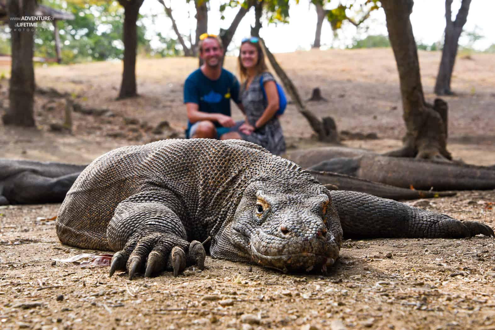 Komodo Dragon with Dora & Michael on Rinca Island